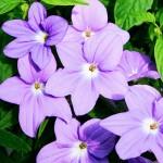 14 цветочных растений для тенистых уголков