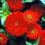 10 самых красивых цветов в красное