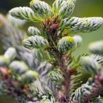 14 вечнозеленых деревьев в зимнем саду
