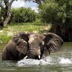 Уединение в объятьях Замбии