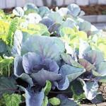10 выносливы к холоду растений для весенних сад