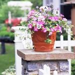 Рецепты для красивых садов в горшке